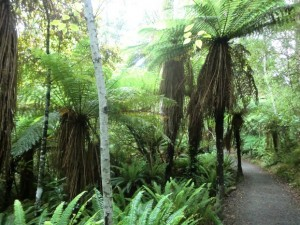 kapradiny na Novém Zélandu